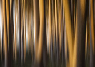 Waldimpressionen 2